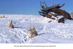 Kari Mettes Grönlandsresa