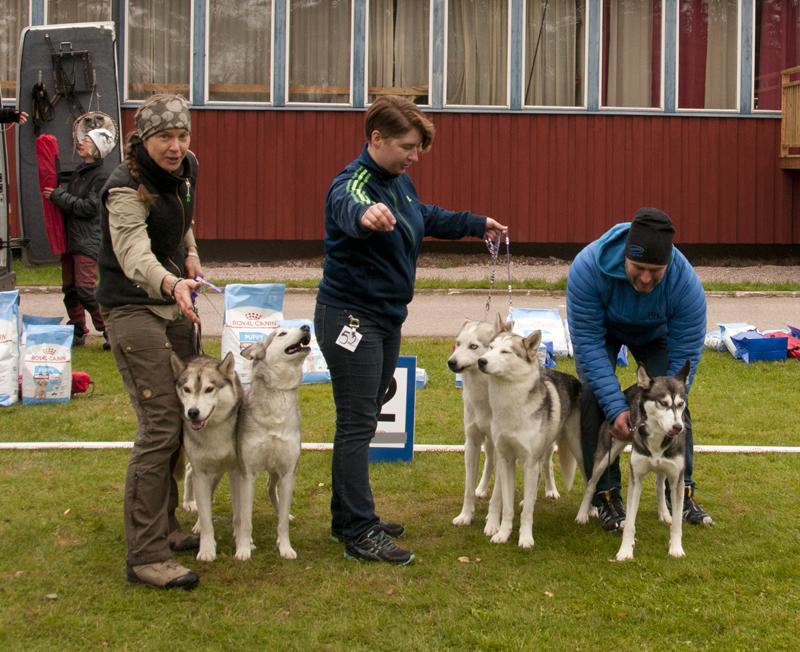Bild på vinnande hundar avelsklass