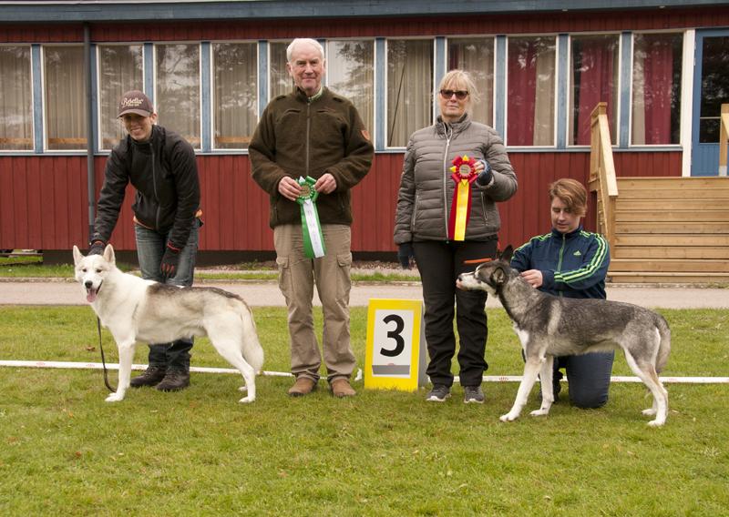 Bild på vinnande hundar bruksklass