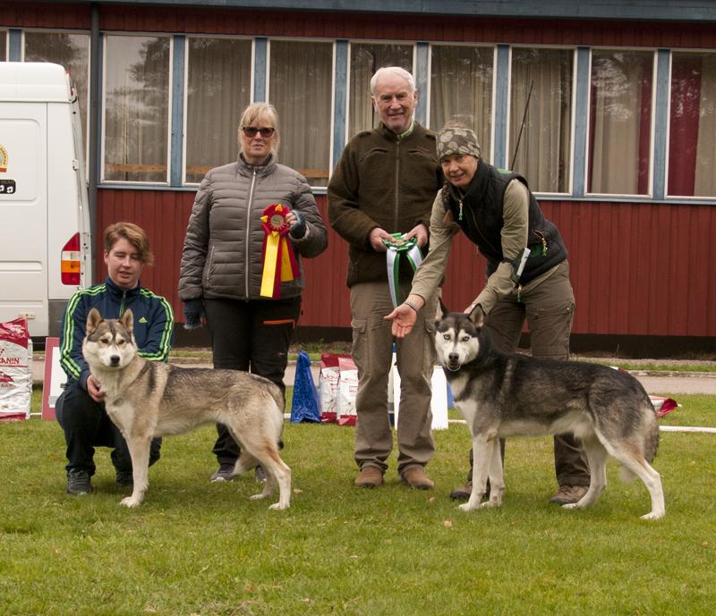 Bild på vinnande hundar championklass