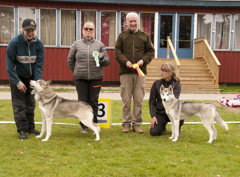 Bild på vinnande hundar i juniorklass