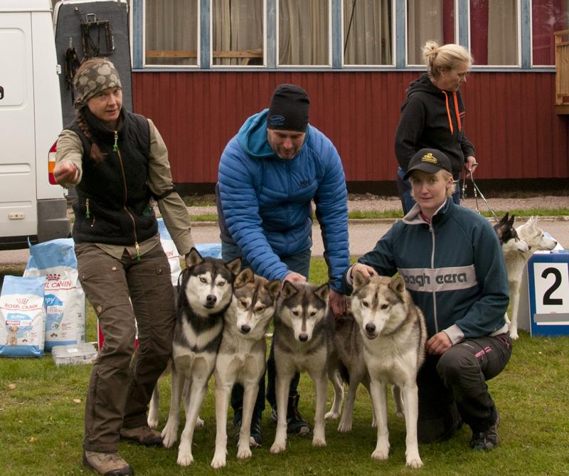 Bild på vinnande hundar i uppfödarklass