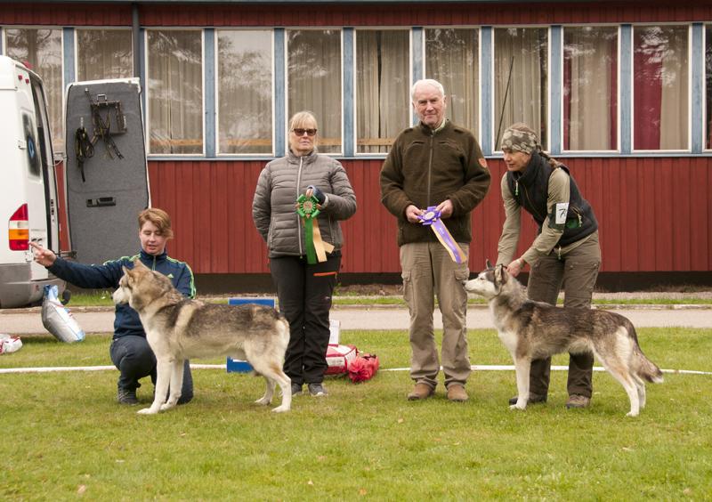 Bilder på de vinnande veteranhundarna