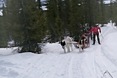 Inkörning-av-grönlandshundsvalpar-7-mån-i-skogarna-kring-Årrenjarka-2