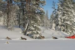 Sverre-Bachs-hundar